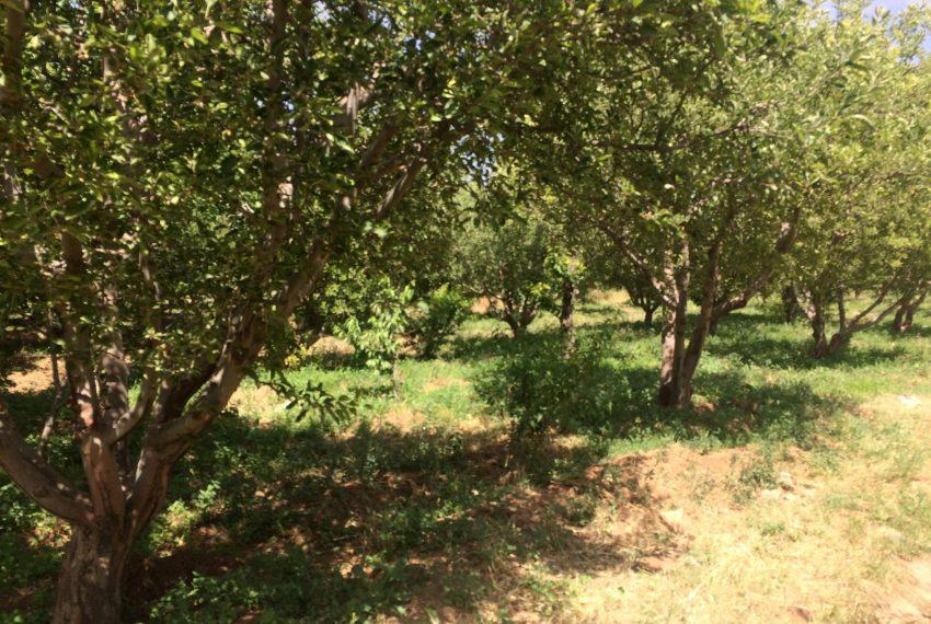 باغ گیلاوند دماوند