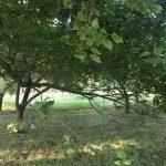 باغ جابان دماوند