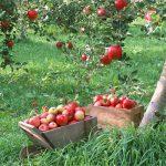 زمین کشاورزی دماوند