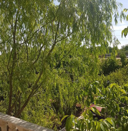 باغ فروشی خیابان سپاه گیلاوند