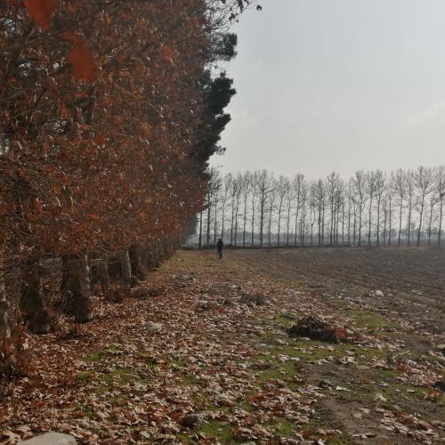 1000 متر زمین در سیدآباد