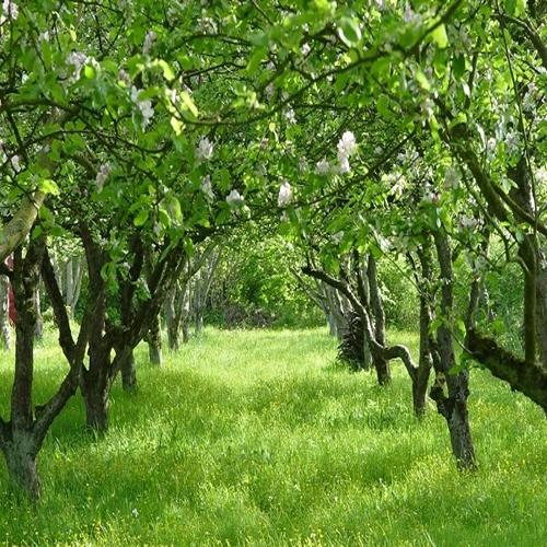 فروش باغ سیب سربندان