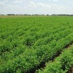 فروش زمین کشاورزی در سربندان